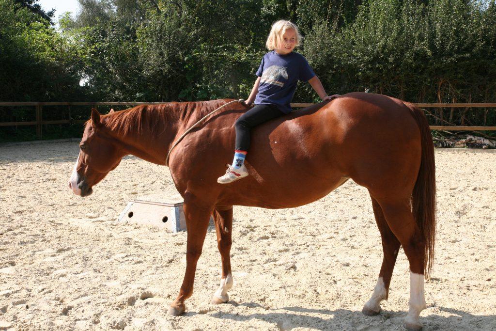 anbieter erste hilfe kurse pferd
